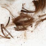 Pourquoi les coiffeurs vous coupent les cheveux «trop