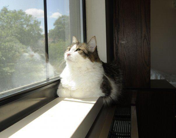 미국 프로비던스의 요양병원 스티어하우스에 사는 고양이 오스카는 죽음을 앞둔 환자에게 다가가 마지막 시간을 함께한다. 2013년에는 오스카가 응급실로 실려가 심정지를 겪었으나, 스티어하우스에 돌아와 회복됐다.