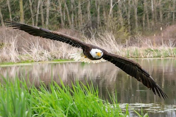 This Canadian Bald Eagle Photo Is One Of Best Wildlife Shots You'll Ever
