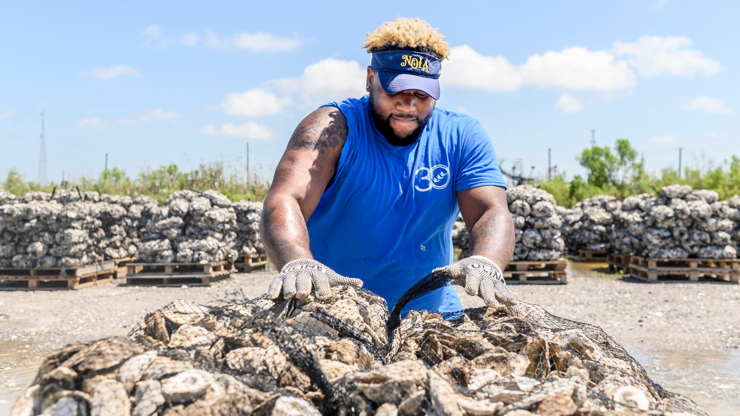 Fighting Rising Tides, Coastal Towns Turn To Humble Oysters To Save Their Land And Their Culture