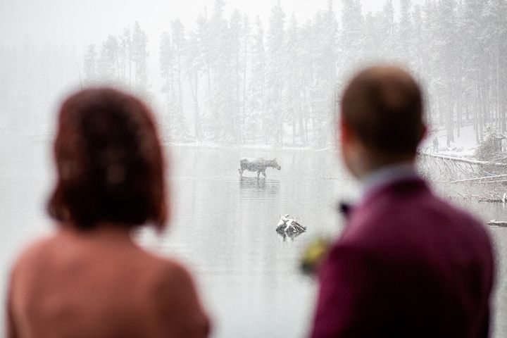 The bride and groom were mesmerized by the beautiful creature.