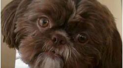 「死んだら愛犬を一緒に埋葬してほしい」飼い主の遺言に従って、元気な犬が安楽死させられる。