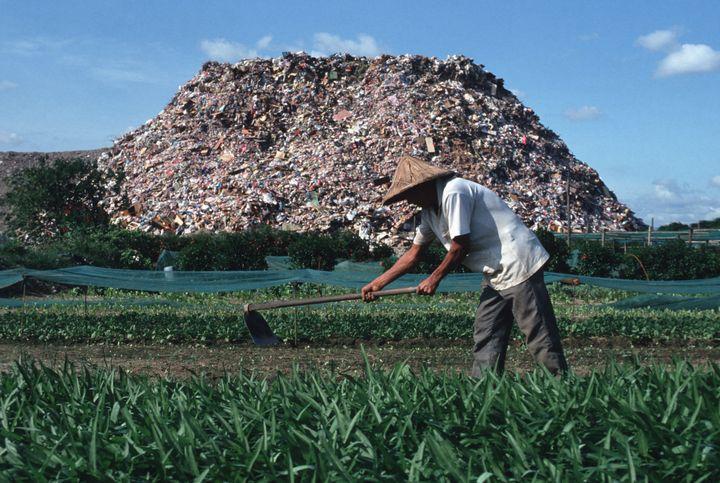 This 1991 photo shows a farmer whose field runs alongside a garbage dump just outside Taipei.