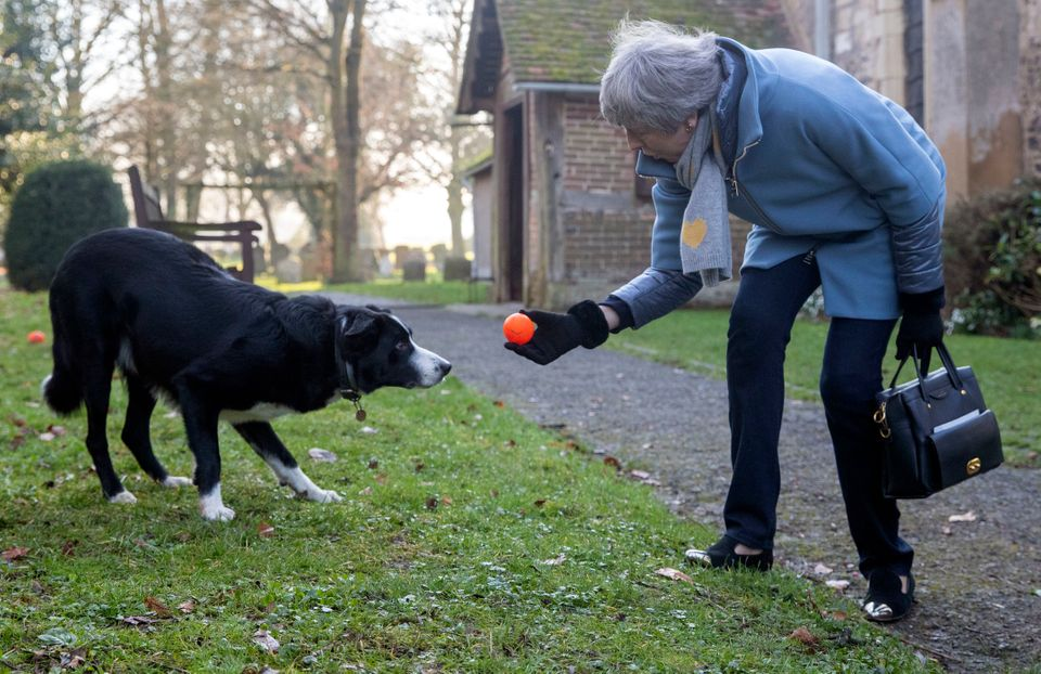 May with border collie
