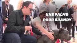 """Le chien de """"Once Upon A Time... In Hollywood"""
