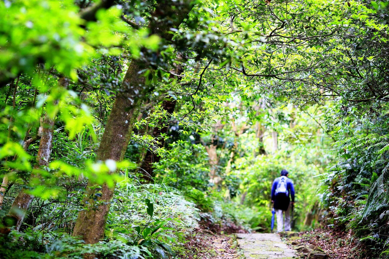 ▲鄰近白石湖的小溪頭環狀步道,充滿森林氣息。