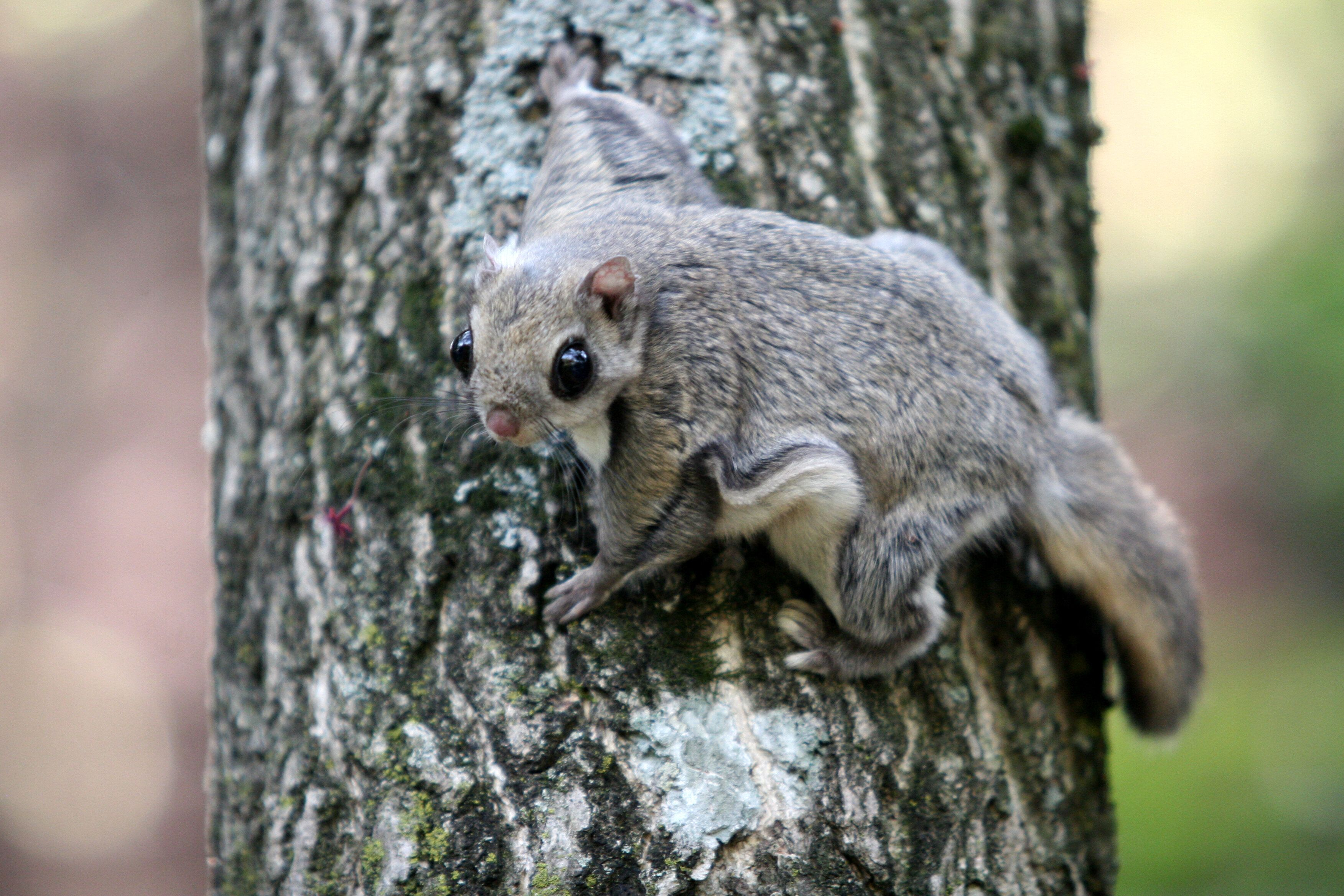 지리산의 새끼 하늘다람쥐들이 부산의 통신업체에서 발견된