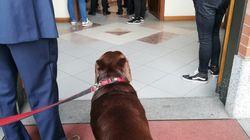 Il prete non lo fa entrare in chiesa, il cane piange sul sagrato al funerale del