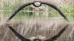 Η φωτογραφία του φαλακρού αετού που έγινε viral μέσα σε λίγες
