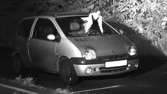 This Tuesday, May 21, 2019 speed camera picture provided by the Police in Viersen, Germany, shows a Pigeon in front of the windscreen of a car. Police in western Germany are attributing to divine intervention a speeder's avoidance of a ticket, after a pigeon flew in front of a traffic enforcement camera at the last second. Perhaps inspired by this week's Ascension Day national Christian holiday, Viersen police said 'the Holy Ghost must have had a plan' to help the driver. (Kreispolizeibehoerde Viersen via AP)