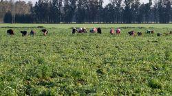 L'ITES dresse les avantages et les dangers de l'ALECA sur l'agriculture