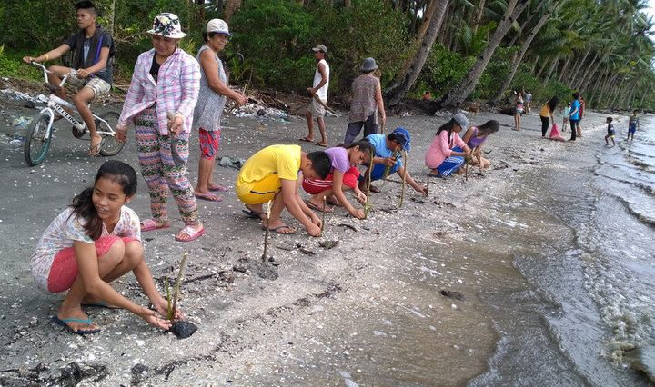 A climate change youth group plants mangrove seedlings on a beach in the Philippines
