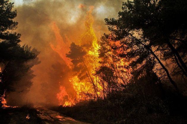 WWF: Ανέτοιμη και φέτος η Ελλάδα απέναντι στον κίνδυνο των δασικών