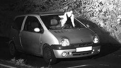 Γερμανία: Περιστέρι «φύλακας άγγελος» γλυτώνει απρόσεκτο οδηγό από βαρύ