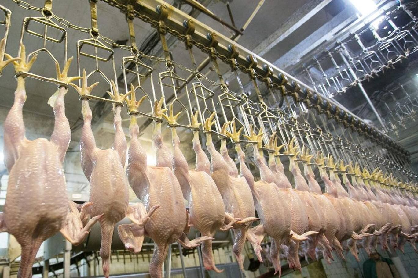 Avec le Brexit, le retour du poulet au chlore américain en Europe ?