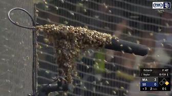 Bees swarm San Diego Padres game.