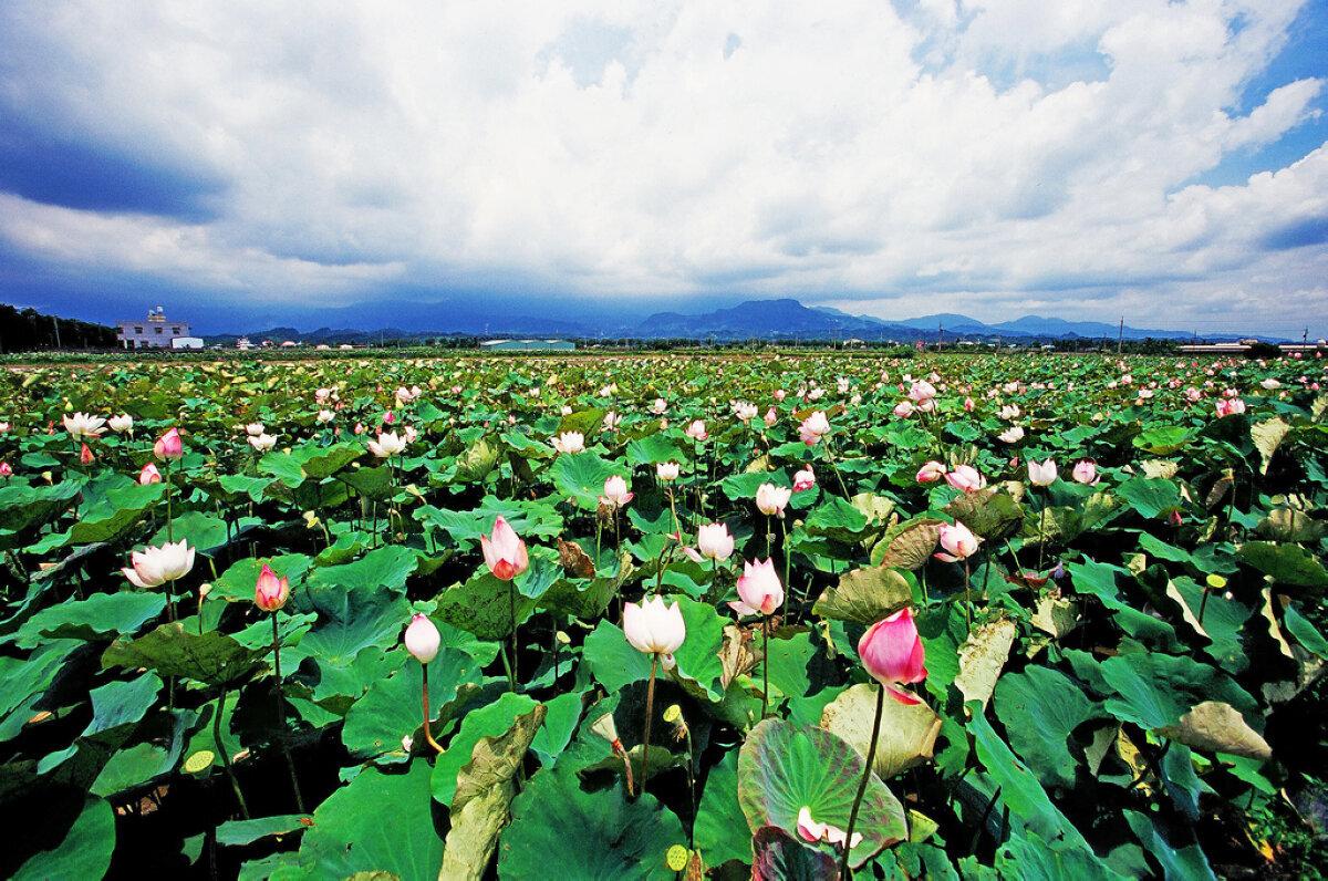 (圖片來源:台南旅遊網)