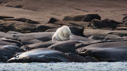 Trump Administration Weakens Endangered Species Act Amid Global Extinction