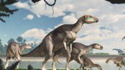 Scoperta in Australia una nuova specie dinosauri.