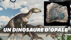 Des fossiles d'opale révèlent une nouvelle espèce de
