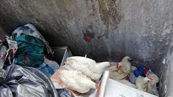 Βρέθηκαν ζωντανές κότες μέσα σε κάδο σκουπιδιών στην