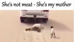 A l'occasion de l'Aïd al-Fitr, PETA invite les musulmans à... ne pas sacrifier de
