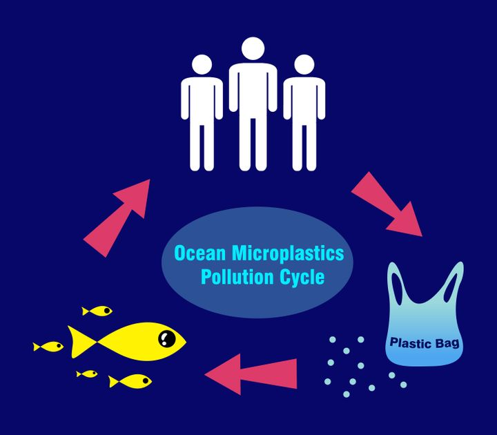 How microplastics potentially seep into our systems.