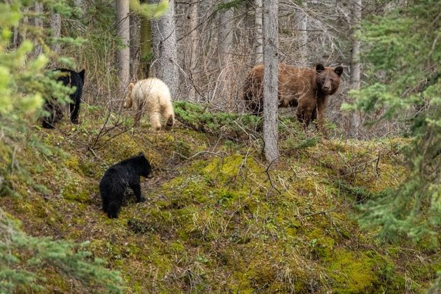 The bears continued on their way after Moussa captured his