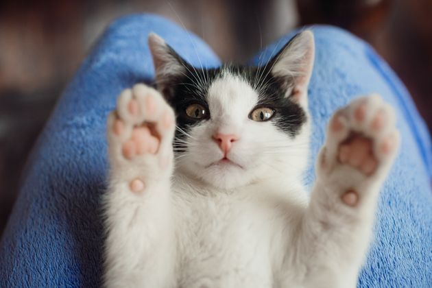 New York is the first state to totally ban declawing cats -- with exceptions for when it's medically...