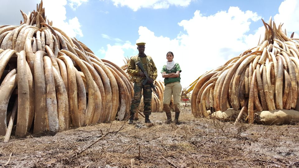 Raabia Hawa (R) and a ranger from the Kenya Wildlife Service (L) stand in front of elephant ivory and rhino horn in Nairobi National Park, Kenya. The piles were later set alight in a demonstration against poaching.
