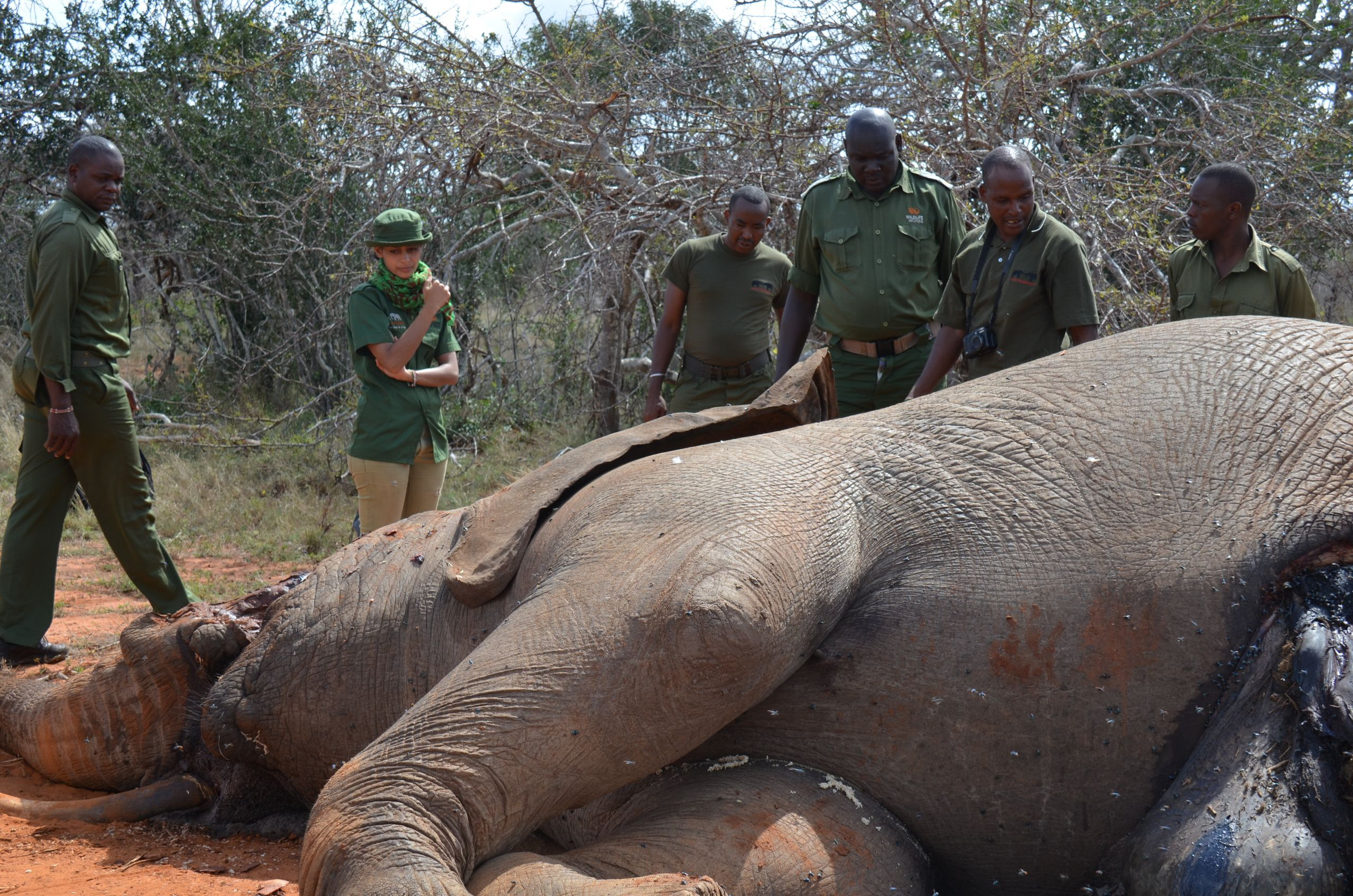 Hawa in front of thefreshly poached, dying elephant that inspired her to act against poachers.
