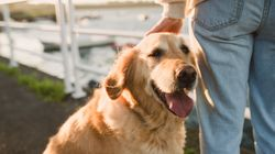 Dogs Can Feel Our Stress, Study