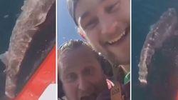 Tagliano la coda a uno squalo e festeggiano sui social: due pescatori licenziati dopo le proteste in tutto il