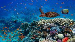 La perdita di biodiversità mette a rischio lo sviluppo dell'intero