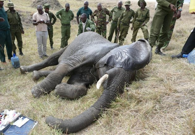 Britain Is A Nation Of Animal Lovers. So Let's Act Now To Stop The Poaching