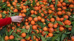 Le Maroc, premier fournisseur de l'Espagne en fruits et légumes au 1er trimestre