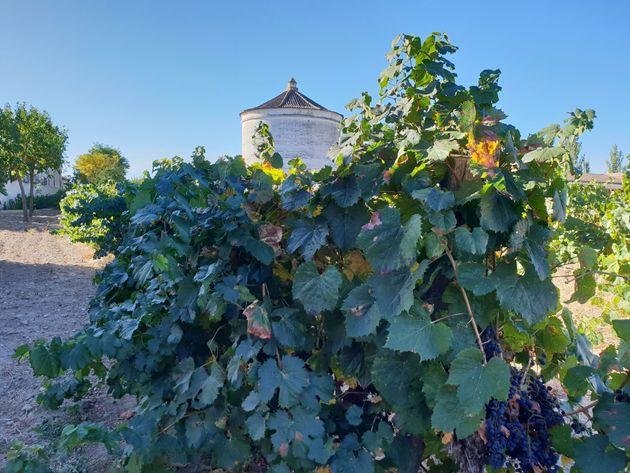 Cómo perderse por las tierras del vino blanco más famoso de