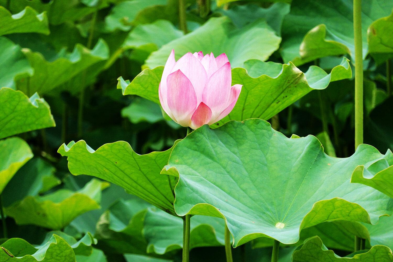 (圖片來源:新北市政府綠美化環境景觀處)