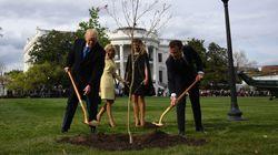L'arbre planté par Macron et Trump à la Maison Blanche est