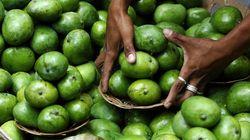 Oι Φιλιππίνες «πλημμύρισαν» από μάνγκο λόγω Ελ