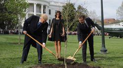 L'albero dell'amicizia piantato da Trump e Macron ad aprile del 2018 è già