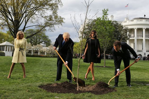 'Friendship Tree' Planted By Trump And Macron Has