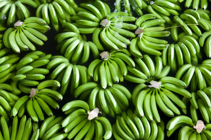 Just-picked Fairtrade bananas being washed on a farm in Colombia