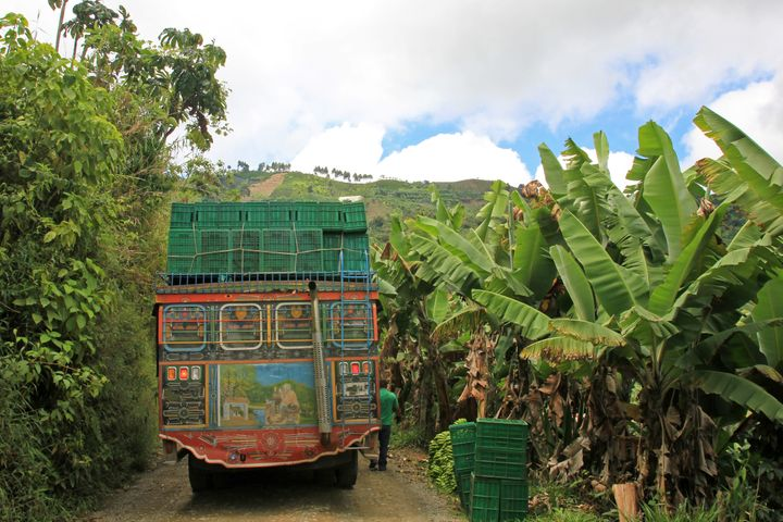 A loading truck with bananas for transporting, near El Jardin Antioquia, Colombia.