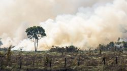 Déforestation en Tunisie: Des statistiques qui font froid dans le