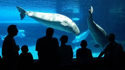 Canada Passes Legislation To Ban Whales, Dolphins In