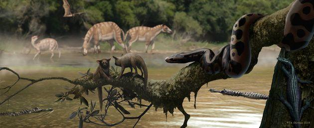 Αναπαράσταση του Palaeopython...