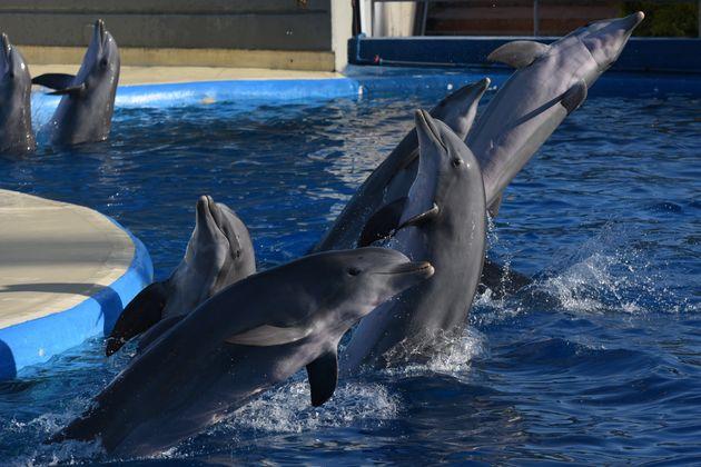Ottawa interdit la captivité de baleines et de dauphins au