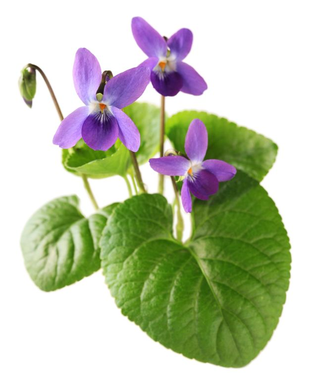 5 plantes sauvages faciles à trouver et à