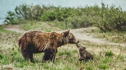 This Photo Of A Mama Smooching Her Cub Is Too Much To